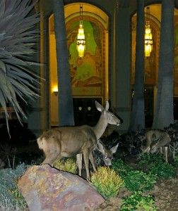 Deer munching on a midnight snack, the landscape in front of the Casino (photo by Pat Benter)