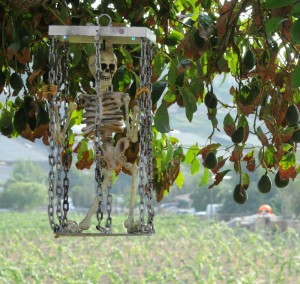 Skeleton in chains guarding the Elliot's vast vineyards (Photo: David Hopley)