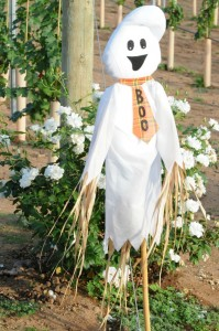 Scarecrow ghost guarding the Elliot's vineyards (Photo: David Hopley)